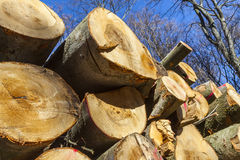 Hög av trä i skog Fotografering för Bildbyråer
