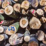 Hög av trä i skog Royaltyfri Foto