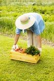 Hög kvinna i trädgård Arkivfoto