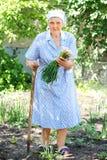 Hög kvinna som arbetar i trädgården Fotografering för Bildbyråer