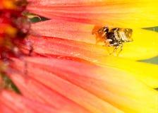 hög spindel för foto för banhoppningmakroförstoring Arkivbild