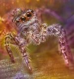 hög spindel för foto för banhoppningmakroförstoring Royaltyfria Foton