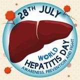 Hígado protegido contra el virus de hepatitis, ejemplo del vector Fotos de archivo
