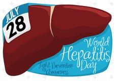 Hígado sano con el calendario y muestra para el día de la hepatitis del mundo, ejemplo del vector Imágenes de archivo libres de regalías
