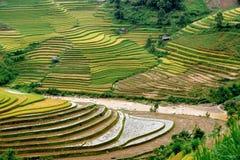 Hügel von terassenförmig angelegten Feldern des Reises Lizenzfreie Stockfotos