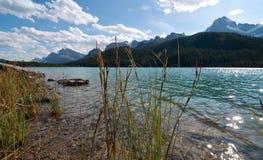 Högväxt gräs längs shoreline på pilbåge sjön Alberta Arkivbilder