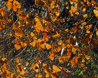 Hi листья Res накаляя стоковые изображения rf
