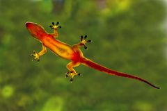 Hi Five Gecko. Gecko clinging to a window Royalty Free Stock Images