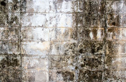 Hi res grunge brick wall background and texture Royalty Free Stock Image