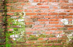 Hi res grunge brick wall background and texture Stock Photos