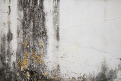 Hi res grunge cement texture and old background Royalty Free Stock Image