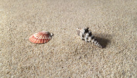 Hi res sea shells on sandy beach Stock Photography