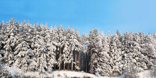 HI-res Wintry panorama 2x1 ratio Stock Photos