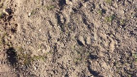 Hi-resolution dirt and grass texture for video games Stock Photos