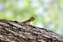 Hi there. Little Lizzard says `Hi` Photo taken in Misiones, Argentina. Nikon D90 stock photos