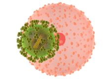 Hi virus infected cell Stock Photo