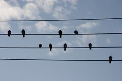 Hi-Wire Birds Royalty Free Stock Photography