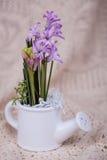 Hiacynt Zdjęcie Royalty Free