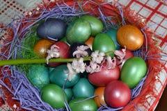Hiacynt w koszu z jajkami fotografia stock