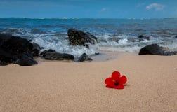 Hiacynth rosso su una spiaggia tropicale Fotografia Stock Libera da Diritti