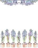 hiacyntowi błękitny kwiaty Fotografia Royalty Free