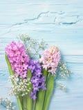Hiacyntowi kwiaty Fotografia Stock