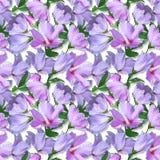 Hibicus de la muestra de las flores Fotos de archivo