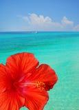 Hibisco en la configuración tropical Fotos de archivo