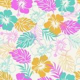 Hibisco floral Fotografía de archivo libre de regalías