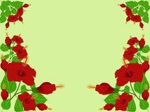 Hibisco rojo Fotografía de archivo libre de regalías