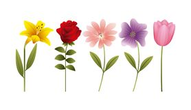 Hibiscus αυξήθηκαν έμβλημα διακοσμήσεων λουλουδιών τουλιπών μαργαριτών Στοκ Εικόνα