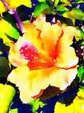 Hibiscus ζωγραφική Watercolor Στοκ εικόνες με δικαίωμα ελεύθερης χρήσης