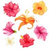 Hibiscus και κρίνων λουλούδια Στοκ Εικόνα