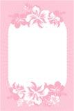 hibiscus καρτών ροζ Στοκ Φωτογραφίες