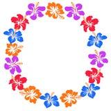 Hibiscus κύκλος λουλουδιών με το διάστημα αντιγράφων διανυσματική απεικόνιση