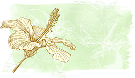 hibiscus λουλουδιών watercolor Στοκ Φωτογραφία