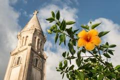 Hibiscus πορτοκαλί λουλούδι Στοκ εικόνα με δικαίωμα ελεύθερης χρήσης