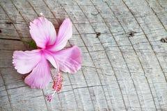 Hibiscus σε ξύλινο Στοκ Εικόνα