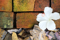 Hibiscus στα κεραμίδια αργίλου Στοκ Εικόνες