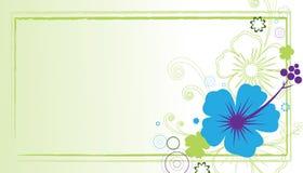 hibiscus визитной карточки Стоковое Изображение RF