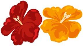 hibiscus цветка Стоковые Изображения RF