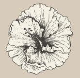 hibiscus цветка Стоковые Фотографии RF