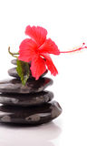 Hibiscus. Fresh hibiscus on spa stones Royalty Free Stock Photography