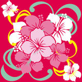 Hibiscus. Cute illustration of a hibiscus Royalty Free Stock Images