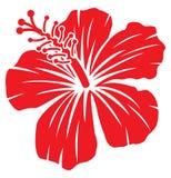 Hibiscus stock abbildung
