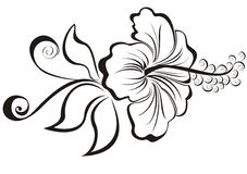 Hibiscus Royalty Free Stock Images