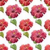 Hibiscus1 Fotografering för Bildbyråer