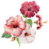 Hibiscus2 Arkivbilder