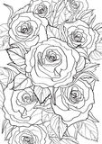 hibiscus Стоковое Изображение RF