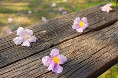Hibiscus auf Holz Lizenzfreie Stockbilder